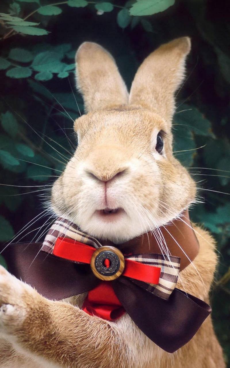 兔子图片大全可爱(15张)_可爱图片_表白句