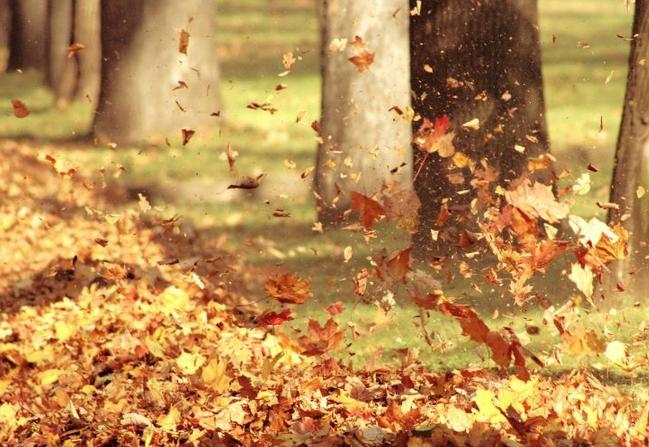 落葉唯美傷感圖片圖片