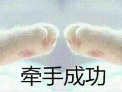 牵手成功猫爪表情图图片