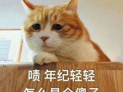 猫咪表情包带字图片