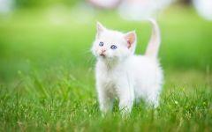 猫图片大全可爱