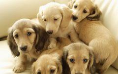 可爱小狗图片