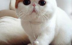 猫的图片可爱
