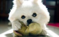 狗狗图片大全可爱