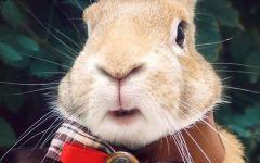 兔子图片大全可爱