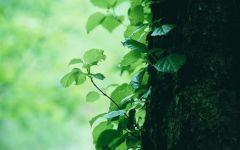 绿色唯美图片意境图片