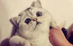 头像情侣抱猫