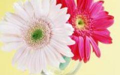 微信头像图片大全花朵