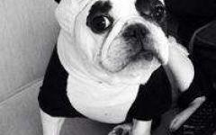 微信头像狗