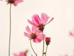 微信头像花草