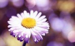 微信头像花朵
