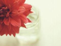微信头像花朵图片大全唯美
