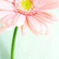 微信头像花朵唯美图片