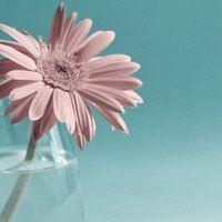 微信头像花朵伤感