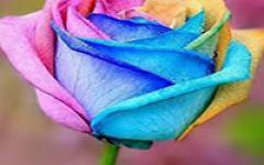 漂亮的花朵微信头像
