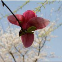 最好看的微信花朵头像五颜六色