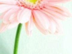 微信头像图片花朵唯美