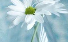 微信头像图片花卉
