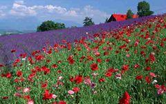 微信头像春天风景图片