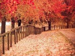 风景qq头像图片有树的