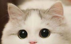 可爱猫咪图