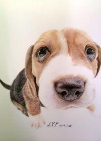 可爱小狗照片