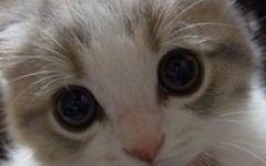 可爱猫咪图片头像