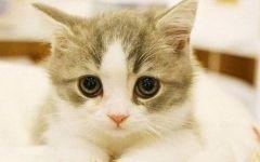可爱猫咪的图片
