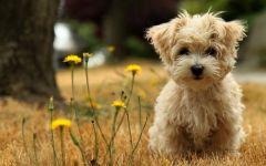 可爱宠物狗狗图片