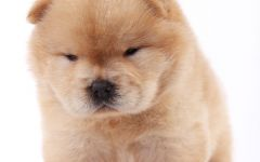 可爱小狗狗图片