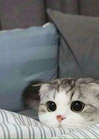 小猫照片可爱头像图片