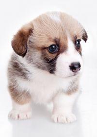可爱的小狗照片