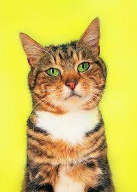 可爱的小猫照片大全