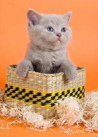 可爱的猫的照片