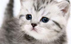 猫猫可爱图