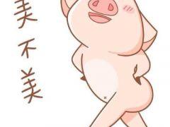 可爱猪的头像