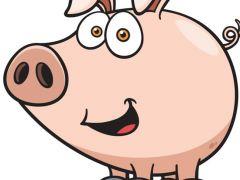 小猪的图片超可爱