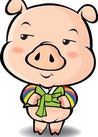 猪的照片图片可爱