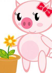 可爱小猪的照片