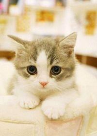 萌猫照片大全可爱
