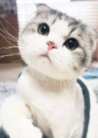 猫的照片可爱头像