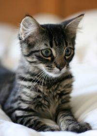 猫的照片图片可爱的