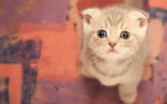 可爱萌猫图
