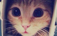猫猫头像可爱