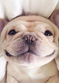 小狗照片可爱头像图片