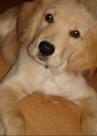 小狗的照片可爱照片