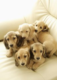 可爱小狗照片大全