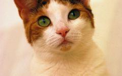 可爱小猫图