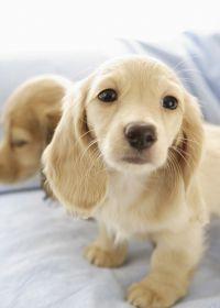 可爱小狗照片大全图片