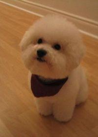 最可爱小狗照片